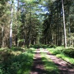 Wandern im Forst